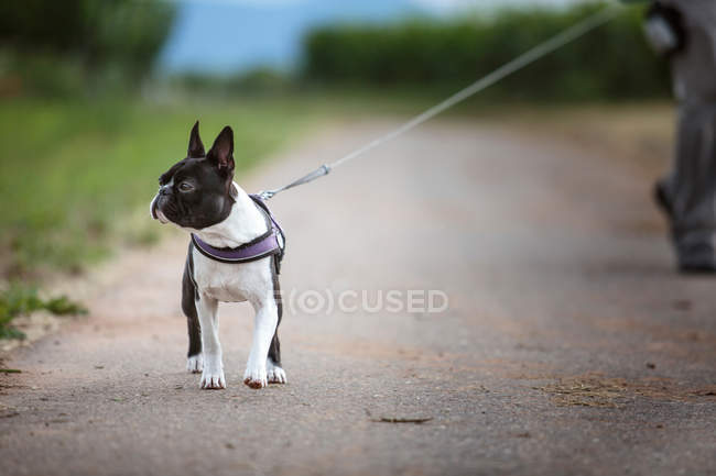 Animal de estimação cachorro olhando de lado — Fotografia de Stock