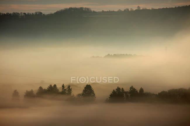 Campo y árboles en la niebla - foto de stock