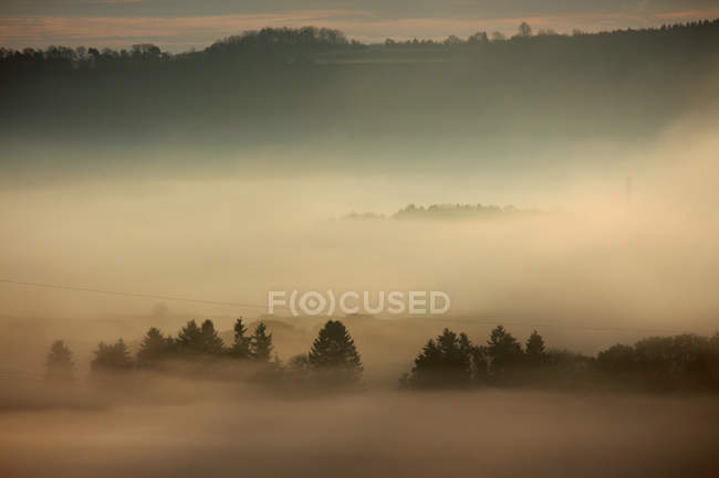 Field view and trees in fog — Stock Photo