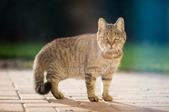 Pé de gato na calçada — Fotografia de Stock