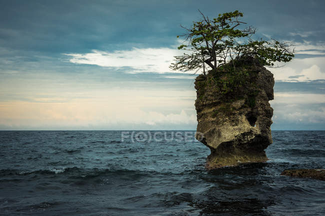 Pines growing on rock in sea — Stock Photo