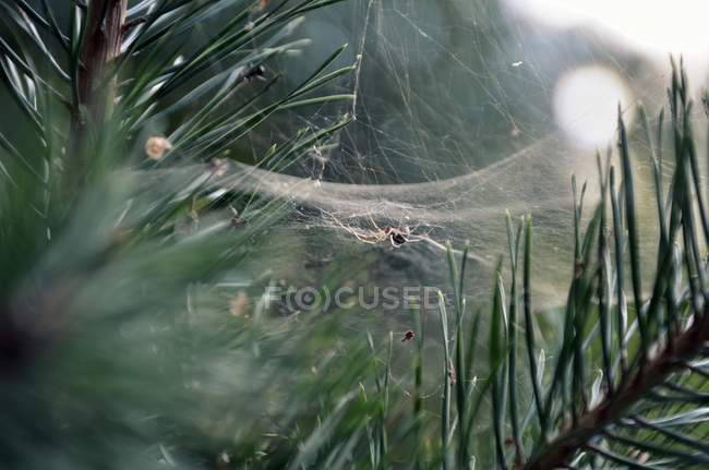 Close-up view of spider net in forest — Stock Photo