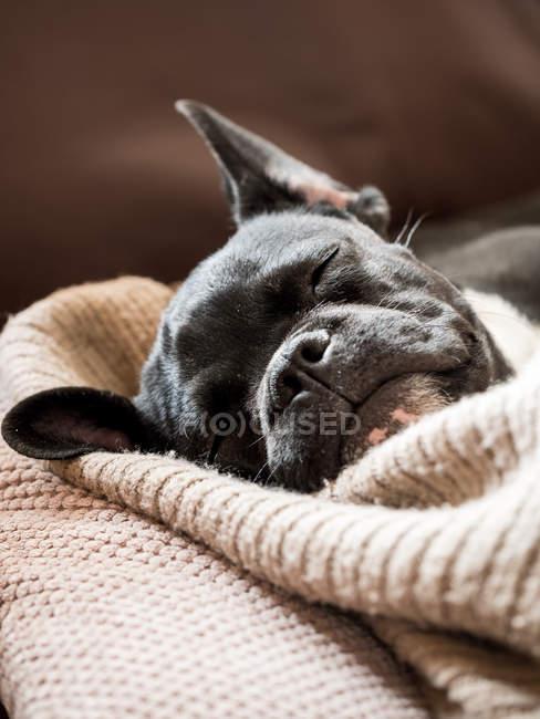Couchage chien — Photo de stock