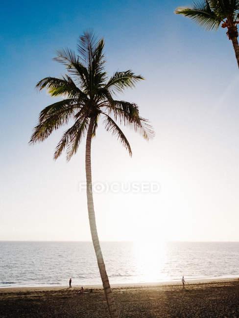 Palme am Sonnenstrand — Stockfoto