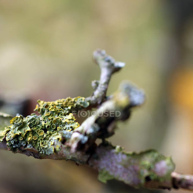 Tree branch overgrown by green moss — Stock Photo