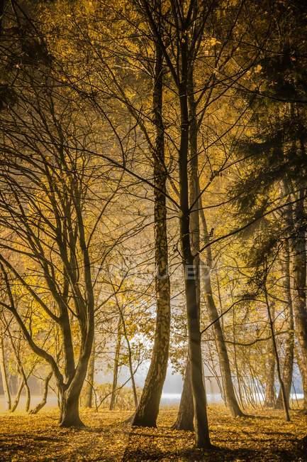 Осенний лес красивой сельской местностью с клен — стоковое фото