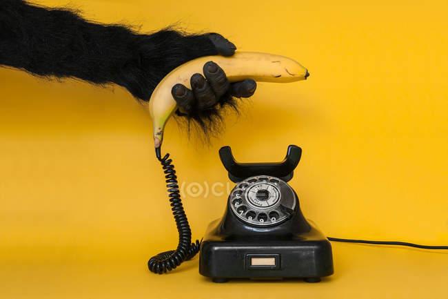 Gorillas hand holding banana as handset — Stock Photo