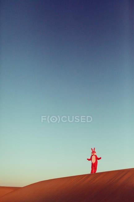 Hase mit Spaß in der Wüste — Stockfoto