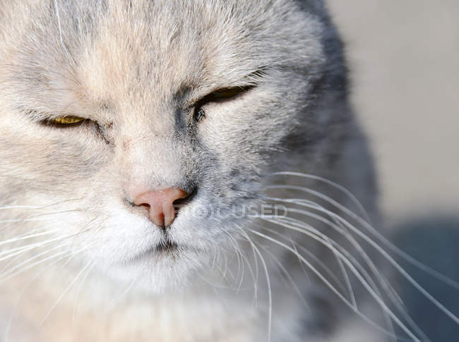 Closeup view of white cat muzzle with closed eyes — Stock Photo