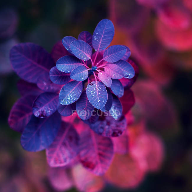 Ramo de arbusto com folhas coloridas — Fotografia de Stock
