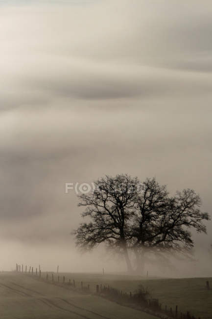 Field view and tree in fog — Stock Photo