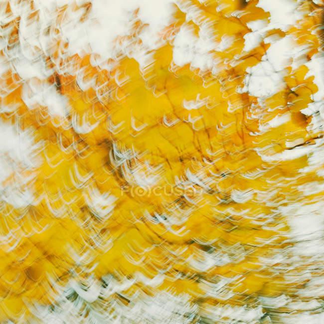 Gelbe herbstlichen Blätter in Bewegung verwischen — Stockfoto