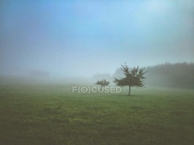 Sichtfeld und Bäume im Nebel — Stockfoto