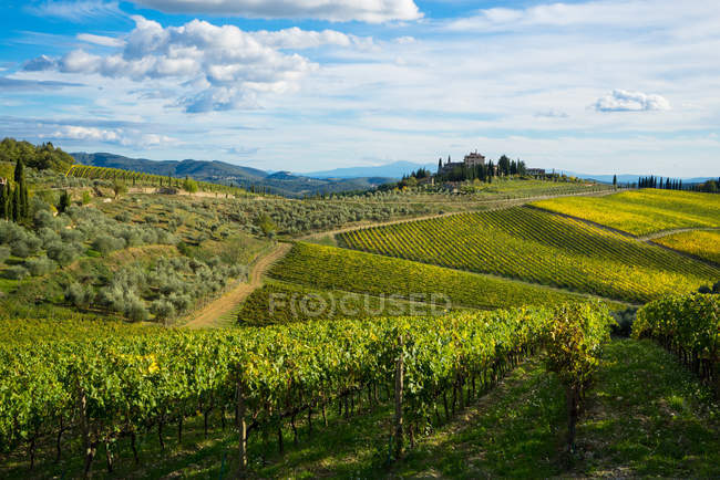 Scenic field and vineyards view — Stock Photo
