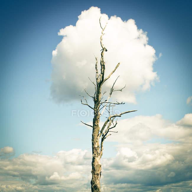 Tagsüber Blick auf Kahler Baum mit bewölktem Himmel auf Hintergrund — Stockfoto