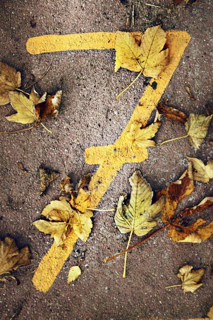 Крупным планом вид числа 7 и листья — стоковое фото