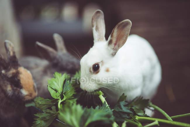 Вид спереди Кролики едят листья — стоковое фото