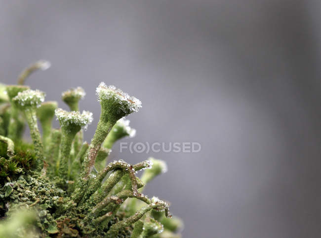 Closeup of green lichen — Stock Photo