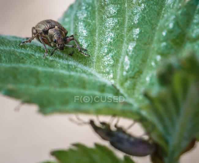 Vista de primer plano de escarabajos en planta - foto de stock