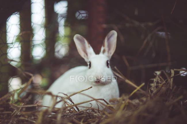 Вид спереди кролика, сидя в соломе — стоковое фото
