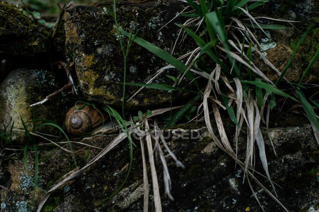 Coperture della lumaca in erba — Foto stock