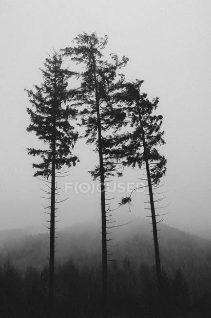 Landschaft mit Blick auf Wald und Kiefern — Stockfoto