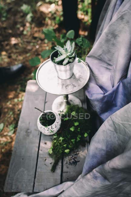 Plantas de casa pequena em uns potenciômetros ao ar livre, plantas suculentas — Fotografia de Stock