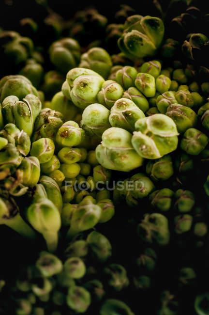 Fresh green broccoli surface — Stock Photo