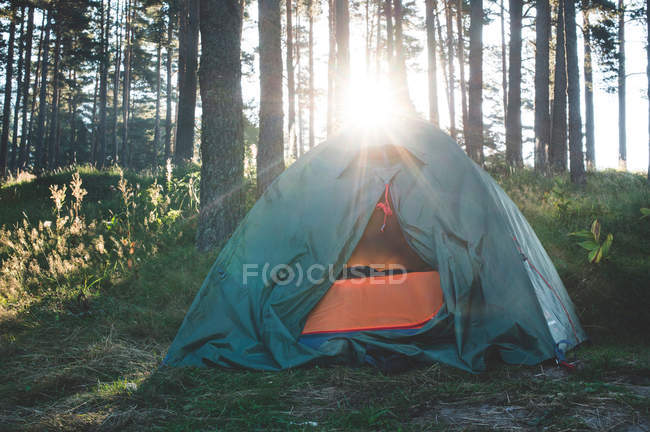 Tent in forest with sun shining — Stock Photo
