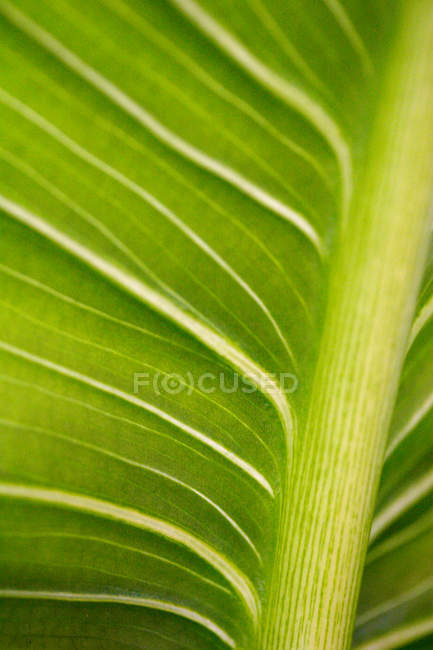 View of plant leaf texture — Stock Photo