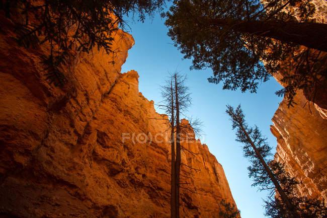 Каньйон Брайс — стокове фото