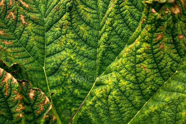 Planta de folhas de texturas — Fotografia de Stock