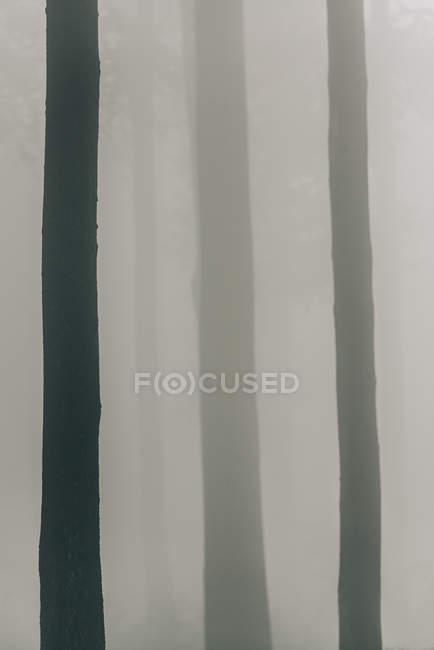 Troncos de árvores no nevoeiro — Fotografia de Stock