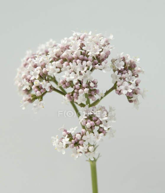 Крупним планом видом диких квітучий рослинництва на відкритому повітрі — стокове фото
