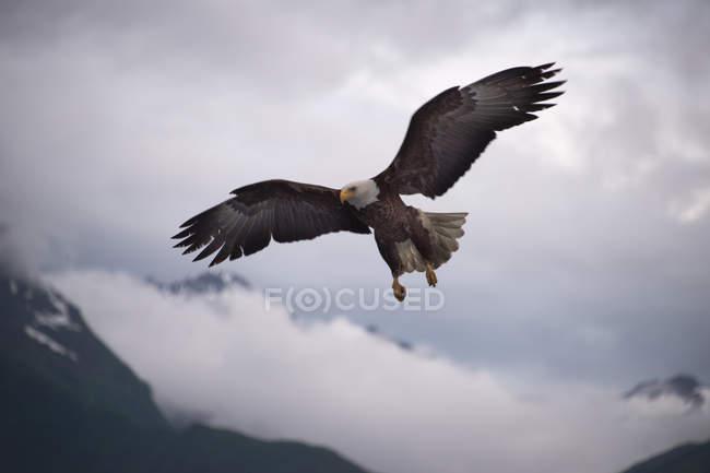 Volo dell'aquila sopra cime di montagne, vista dal basso — Foto stock