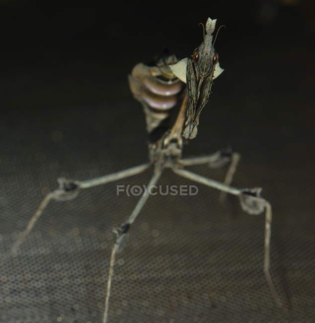 Bug insecte effrayant — Photo de stock