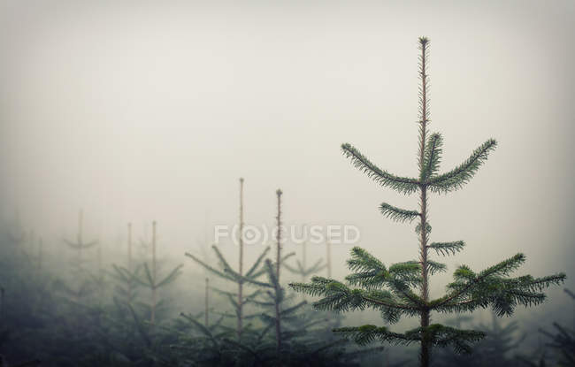 Fog in the dark forest — Stock Photo