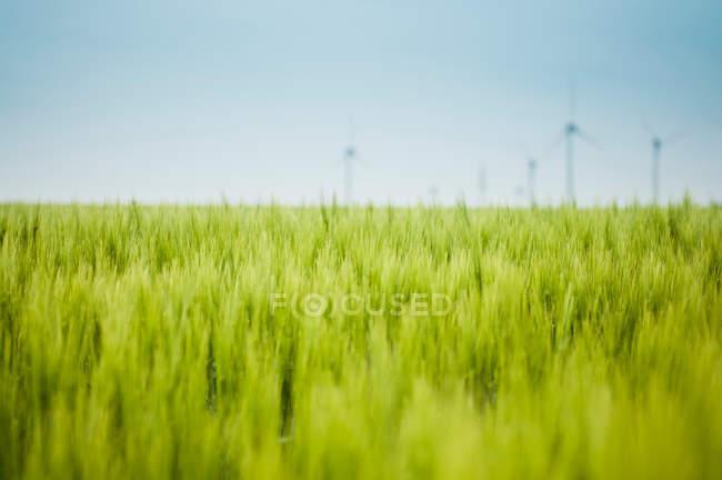 Природа пейзаж с видом на живописные поля, ветряные мельницы на фоне — стоковое фото