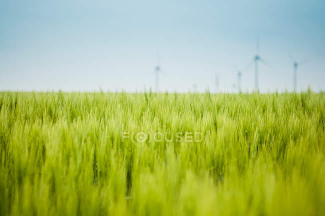 Nature landscape with scenic field view, windmills on background — Stock Photo