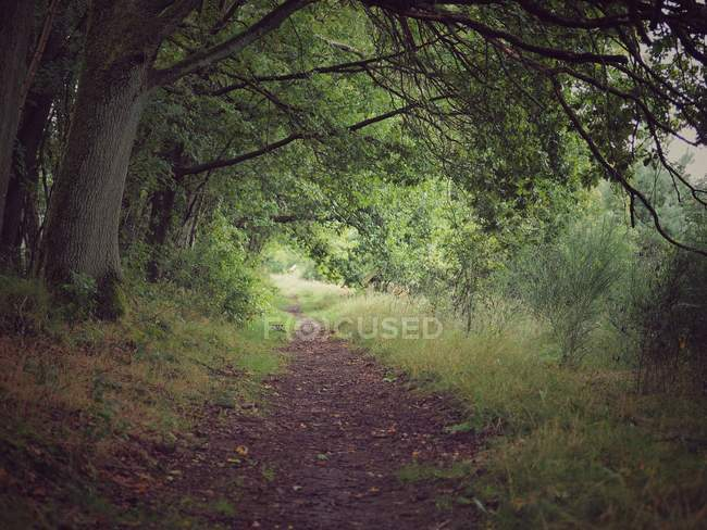 Landscape with forest view — Stock Photo