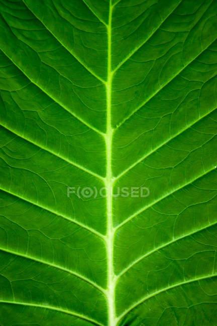 Зелений лист структури — стокове фото