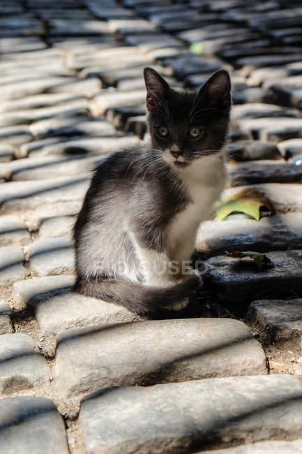 Kitten sitting on roof — Stock Photo