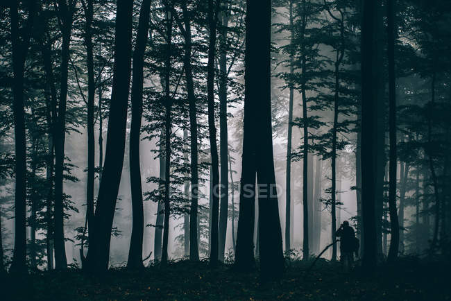 Landscape with dark forest view — Stock Photo