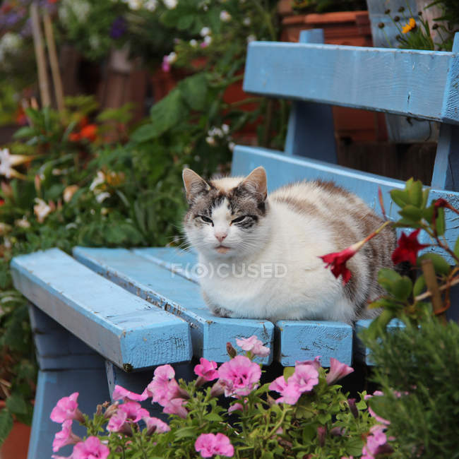 Cat sitting on blue bench — Stock Photo