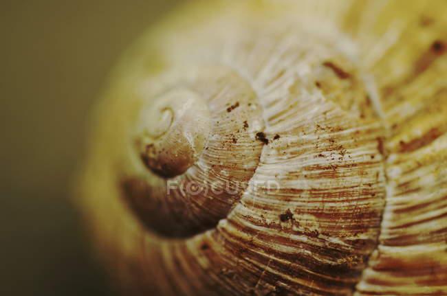 Spirale per coperture della lumaca — Foto stock