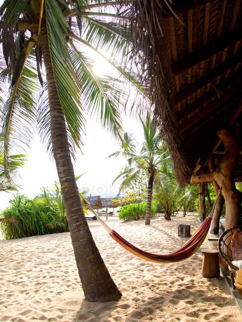 Palmeiras tropicais e árvores na praia com rede — Fotografia de Stock