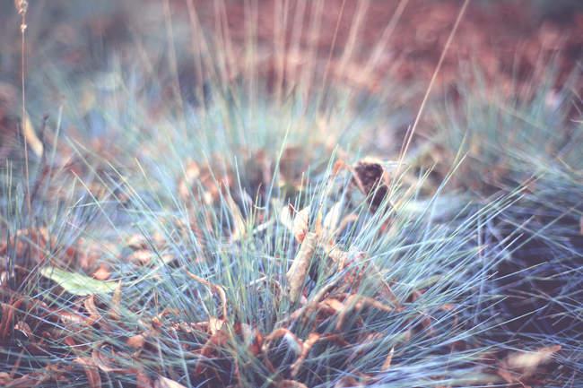 Ervas selvagens, com folhas outonais — Fotografia de Stock