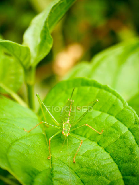 Green beetle on lush green leaf, closeup view — Stock Photo