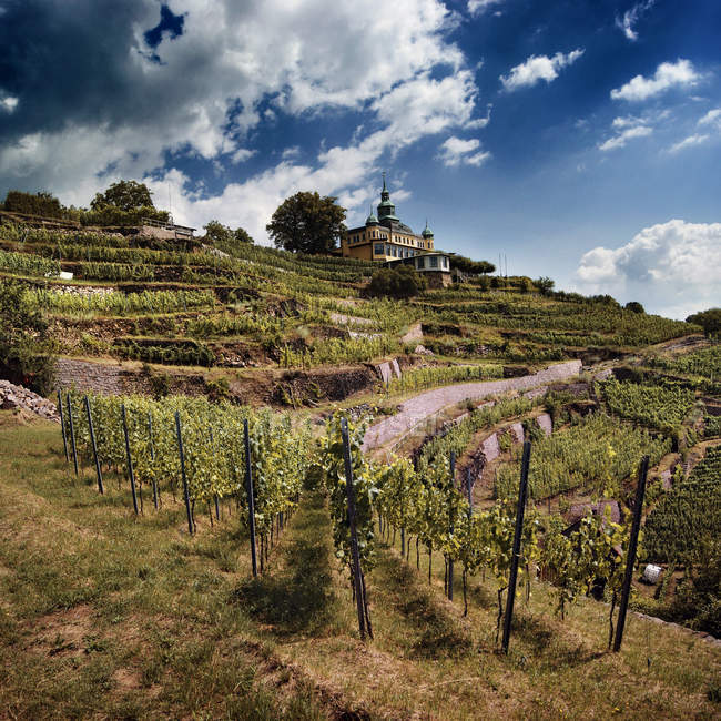 Countryside rural landscape hills with vineyard — Stock Photo