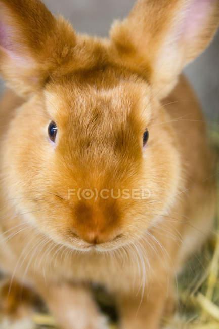 Крупным планом вид головы кролика — стоковое фото